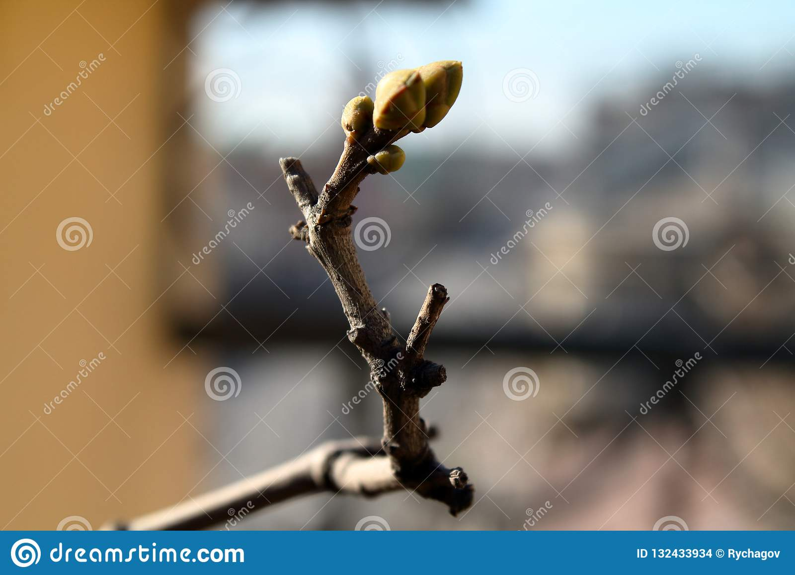 Germogli verdi sul ramo