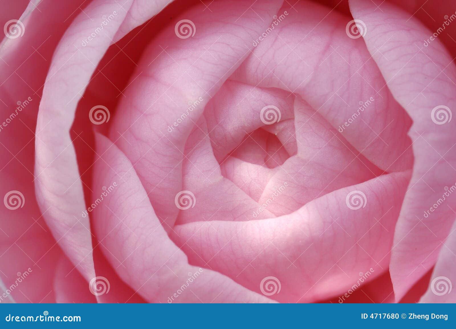 Germoglio di fiore