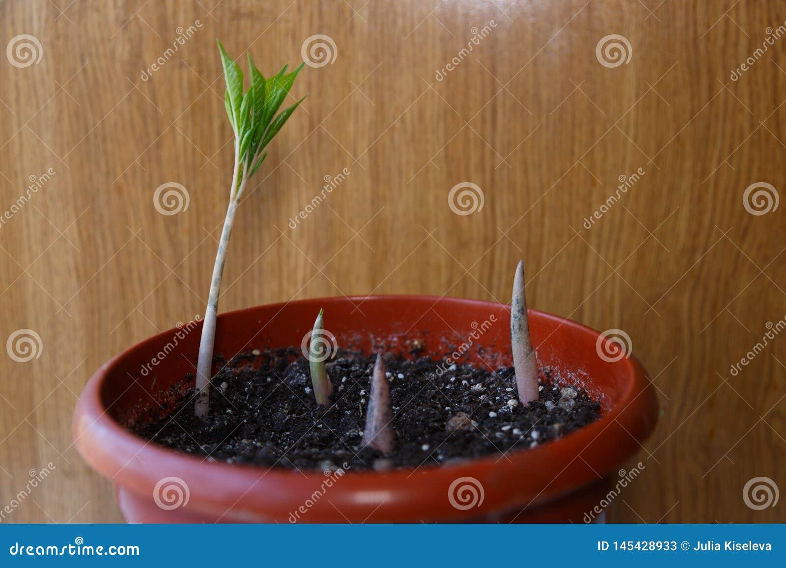 Germoglio verde che cresce fuori dal suolo