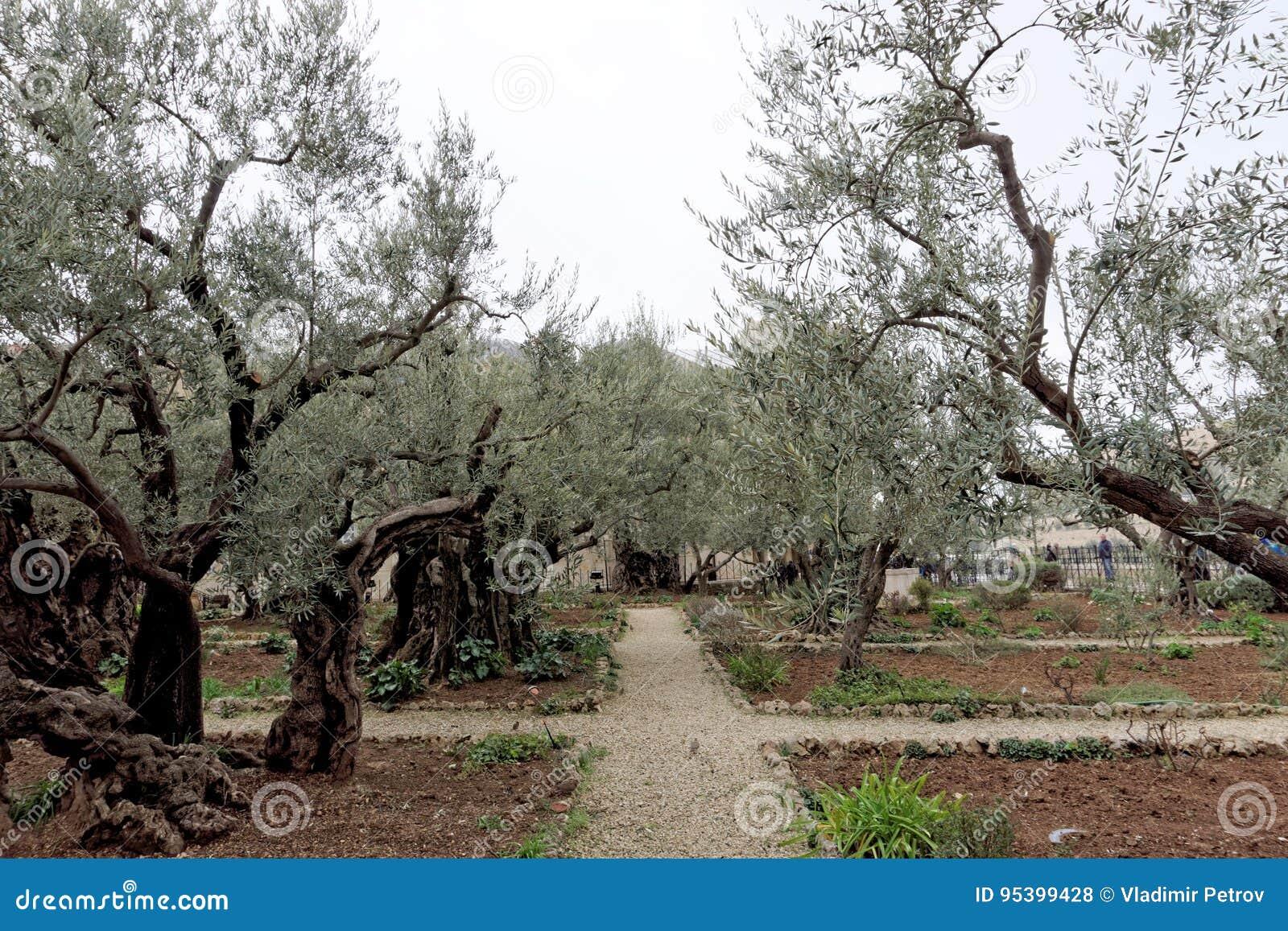 Gerusalemme, Israele - 15 febbraio 2017 Giardino di Gethsemane Il posto del ` s di Jesus Christ che prega sulla notte dell arrest