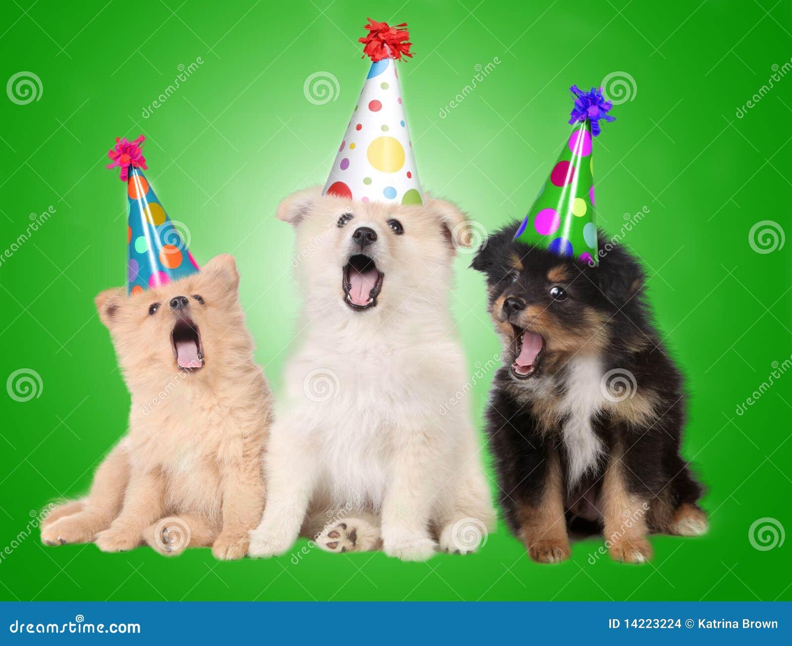 Gesang Geburtstag Welpen Hunde Stockfoto Bild Von Welpe Tier