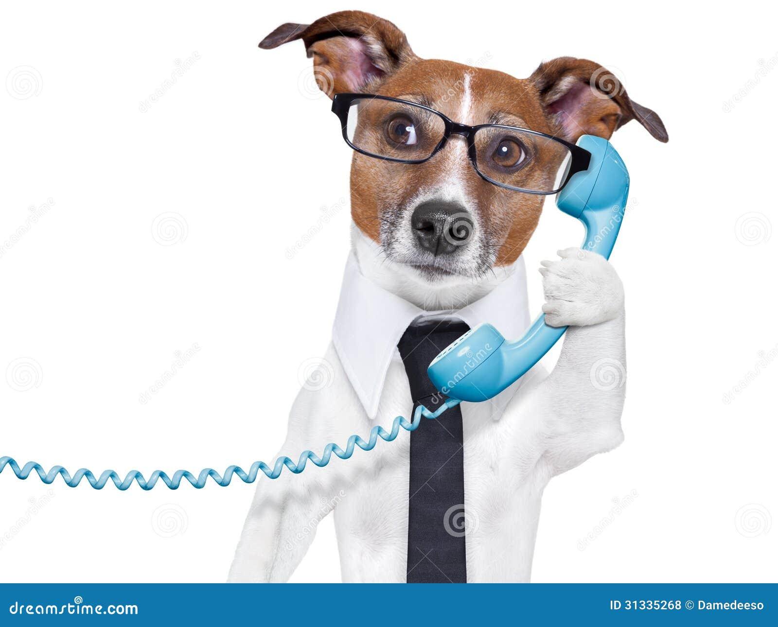 Geschäftshund am Telefon