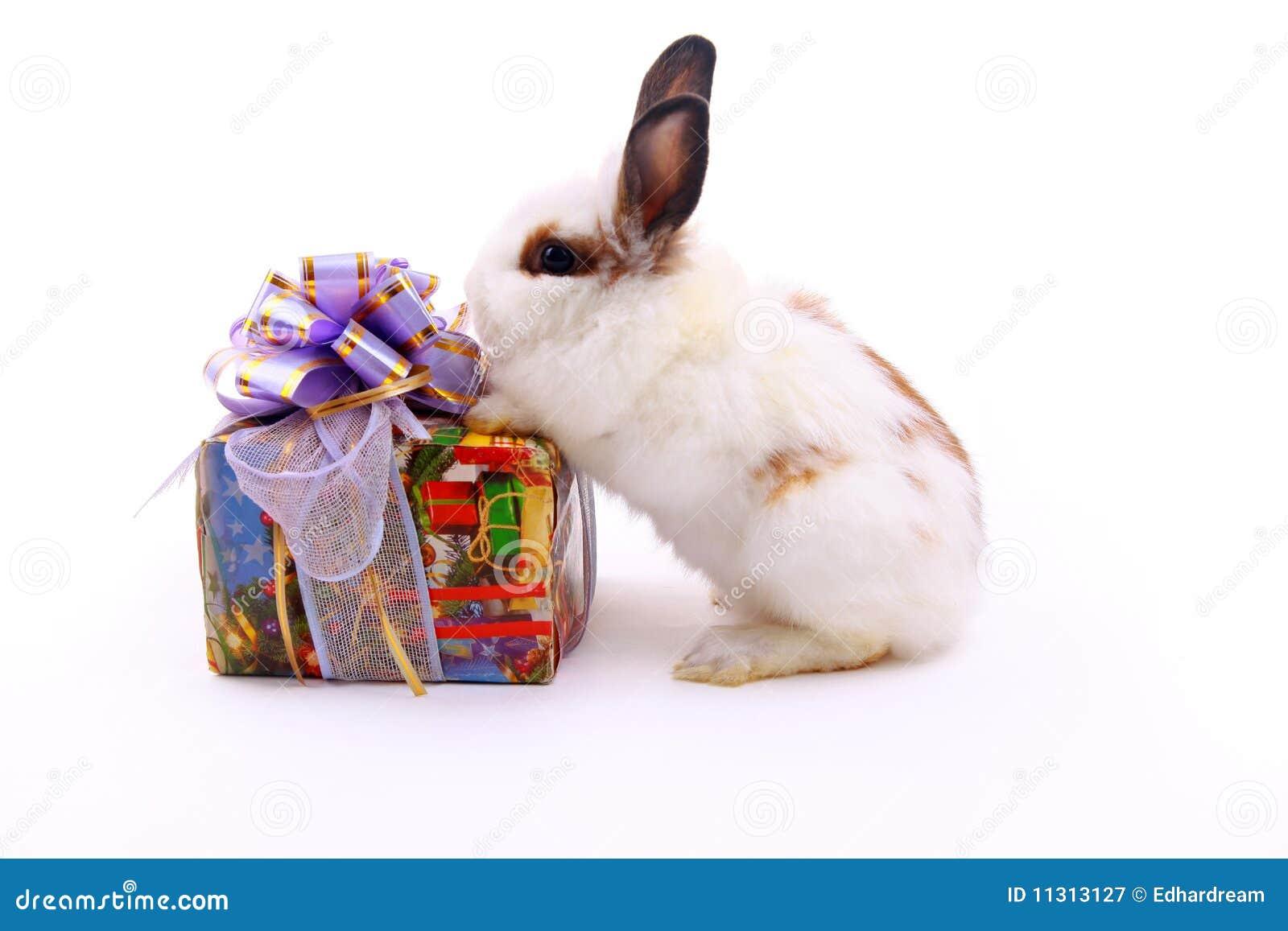 Geschenk und Hasen