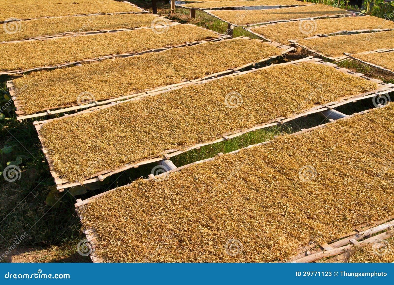 geschnittener tabak auf bambusplatte stockbild - bild von betrieb
