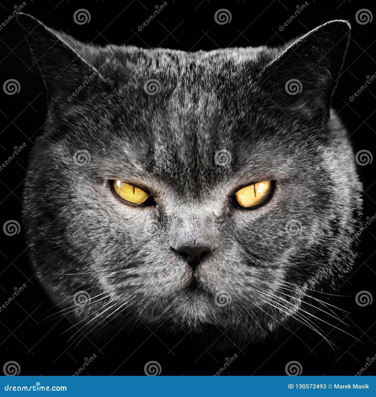 Gesicht der schwarzen Katze