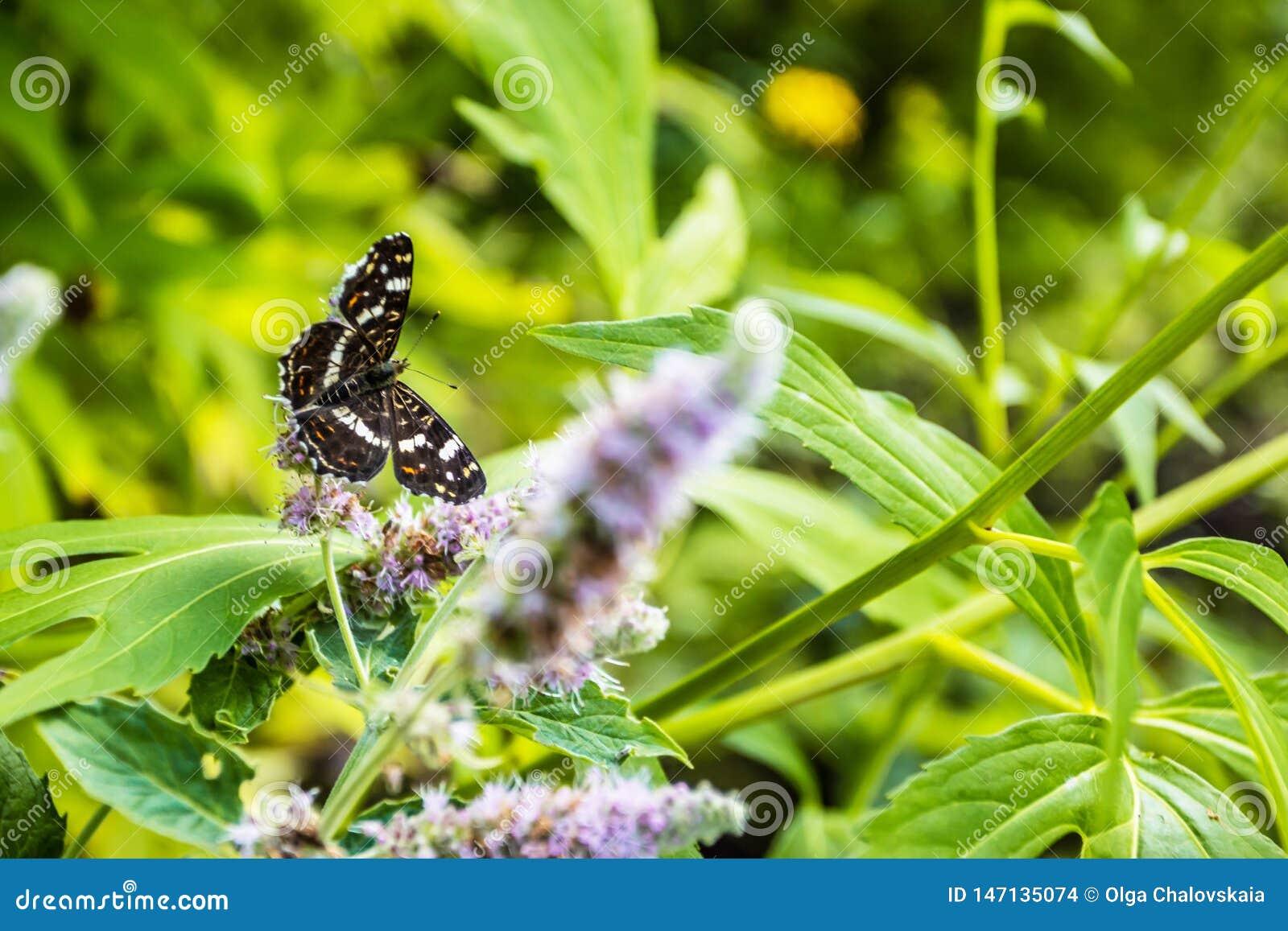 Gesloten omhoog Vlinder op bloem - de achtergrond van de Onduidelijk beeldbloem