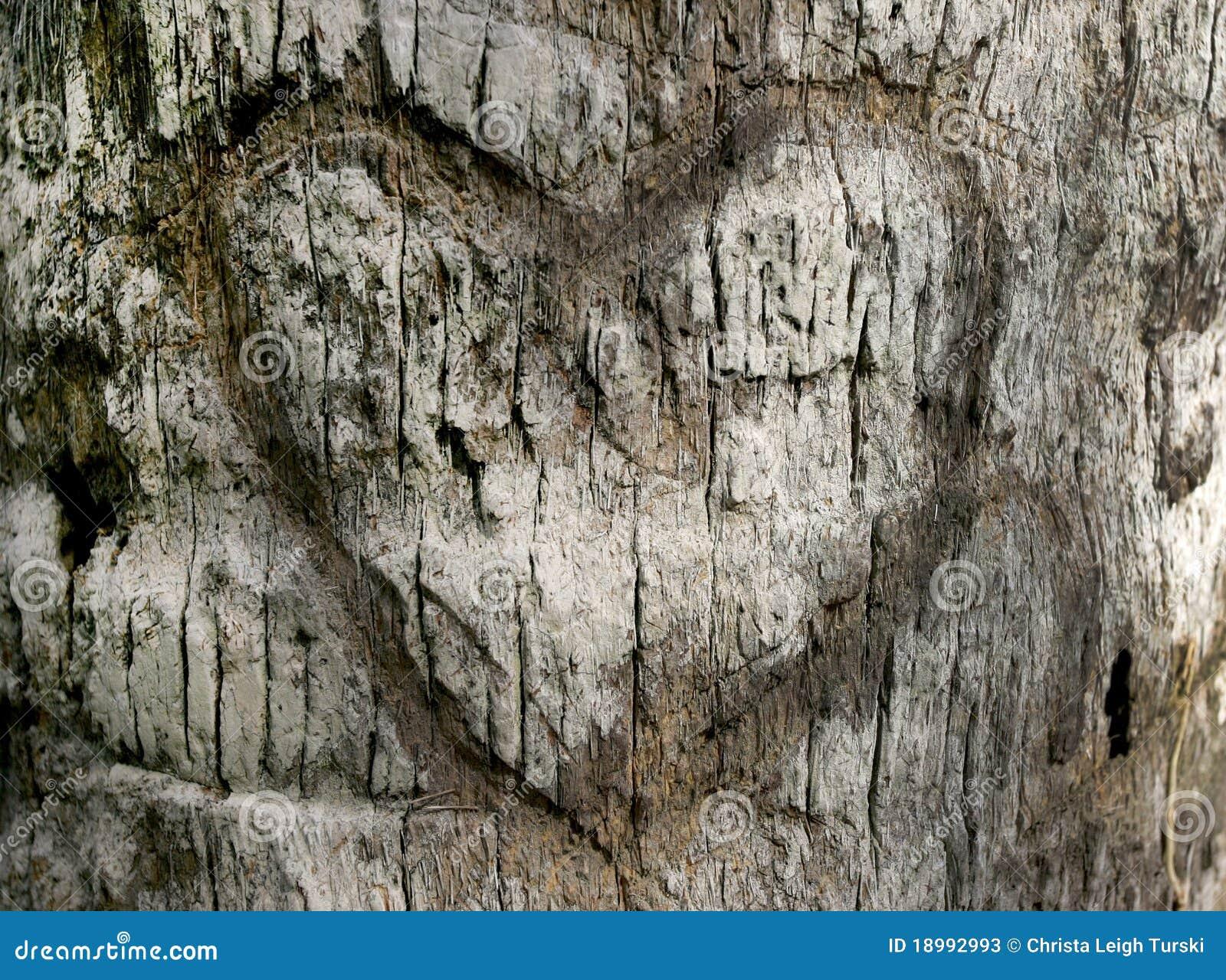 Gesneden hart in de schors van de boom stock afbeelding afbeelding 18992993 - Deksel van de boom ...