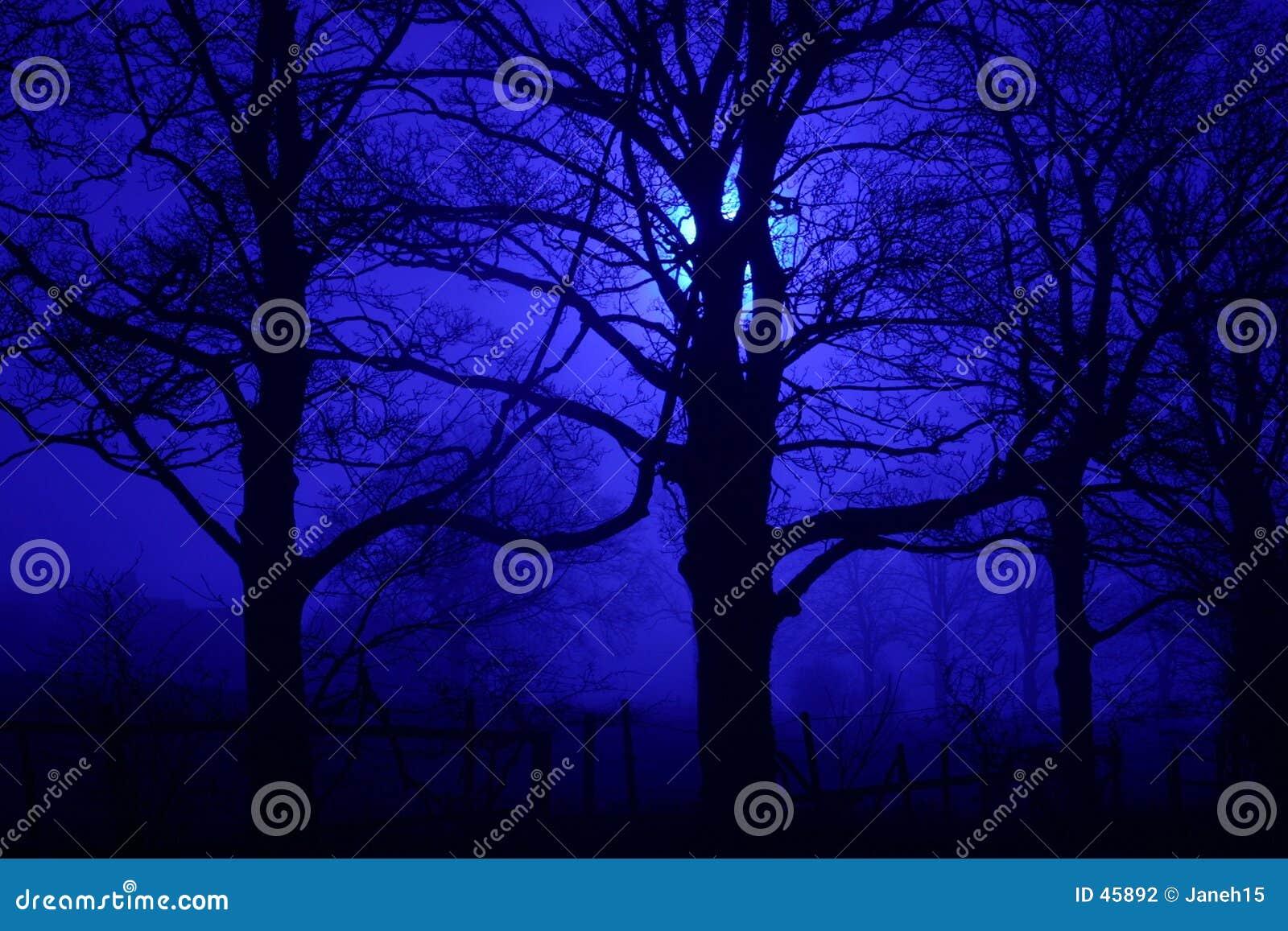 Gespenstische Bäume nachts