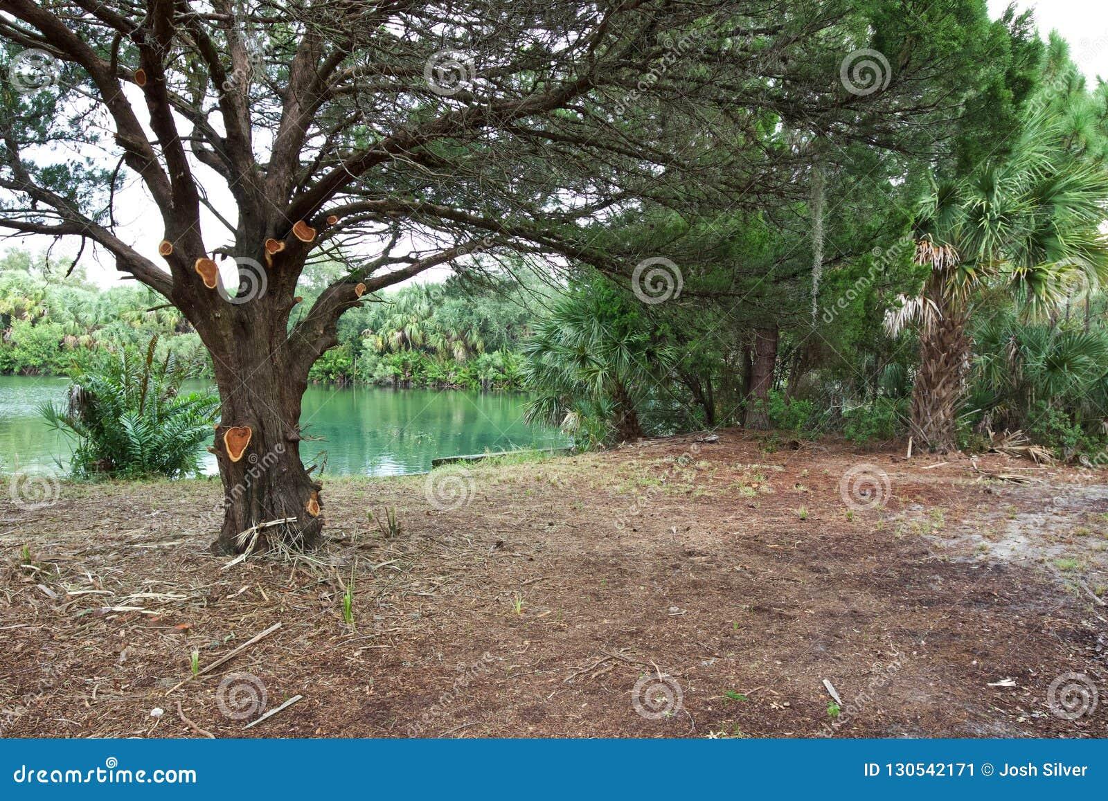 Gespenstischer Baum durch das Wasser
