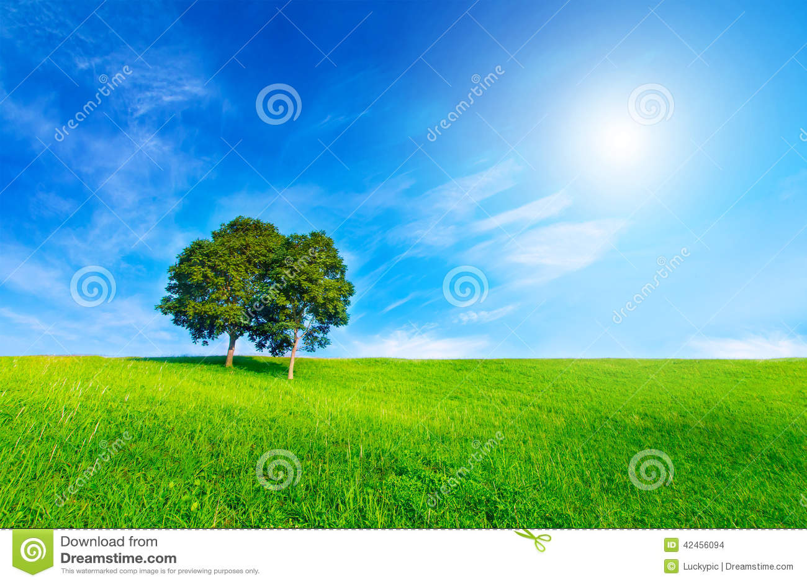 Gestalten Sie Baum in der klaren grünen und blauen Natur und in der Sonne auf blauer SK landschaftlich