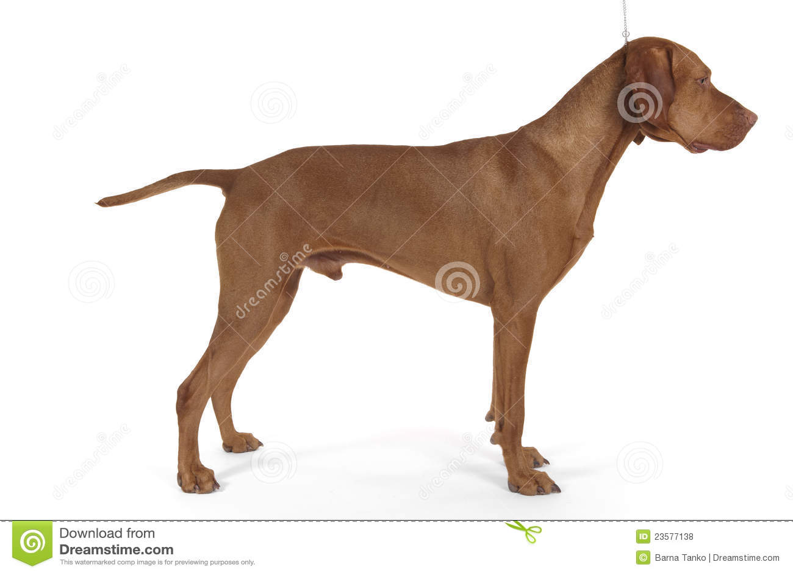 Gestapelde de hond van de zeug