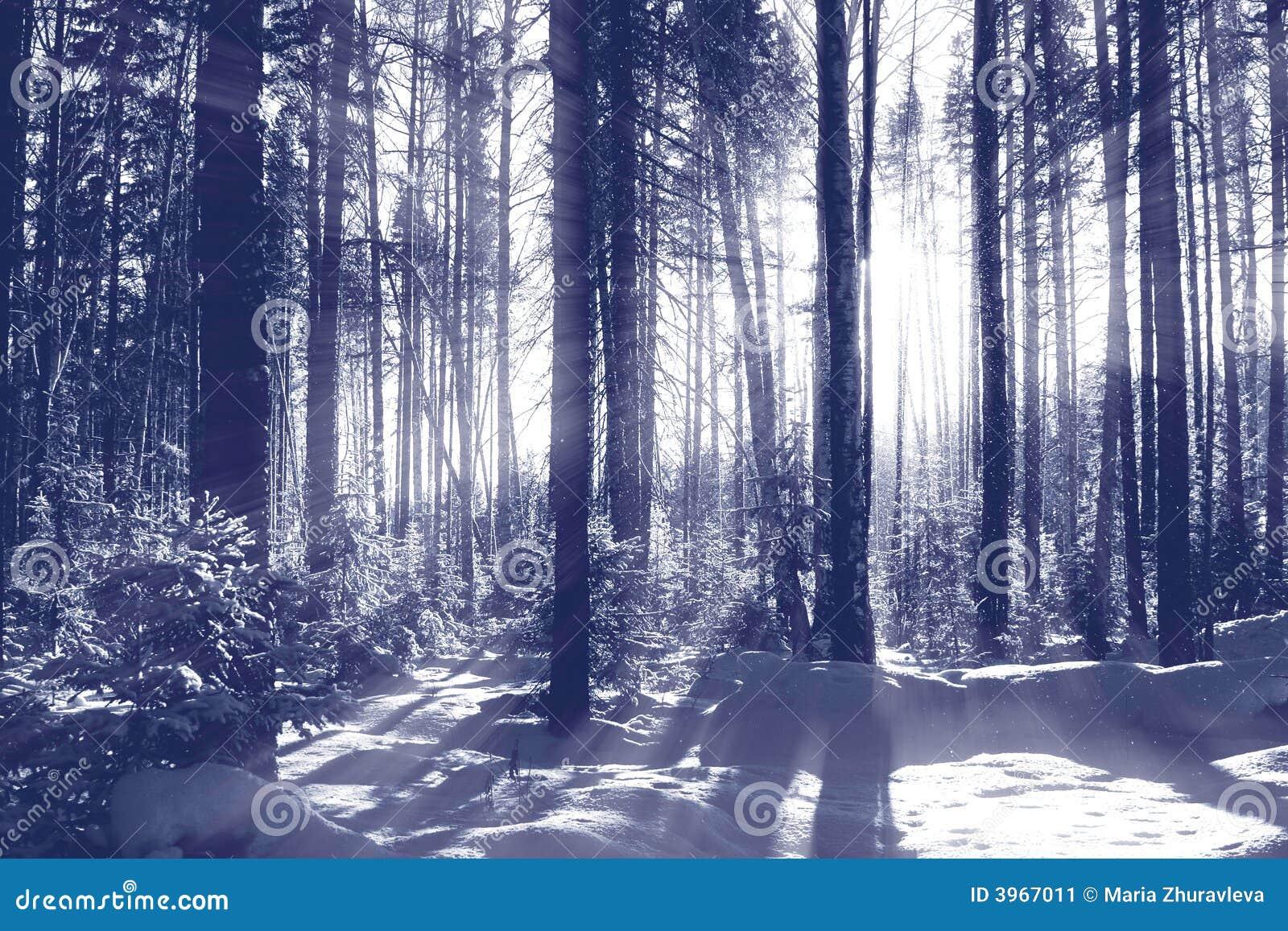 Gestemde het bos van de winter