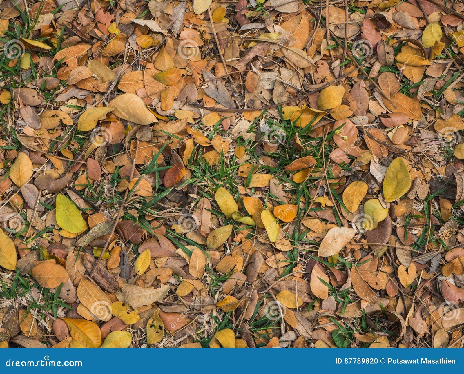 Gestorven bladeren op achtergrond
