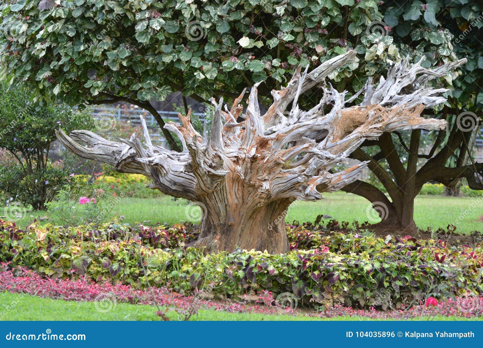 Gestorven boom bij Park