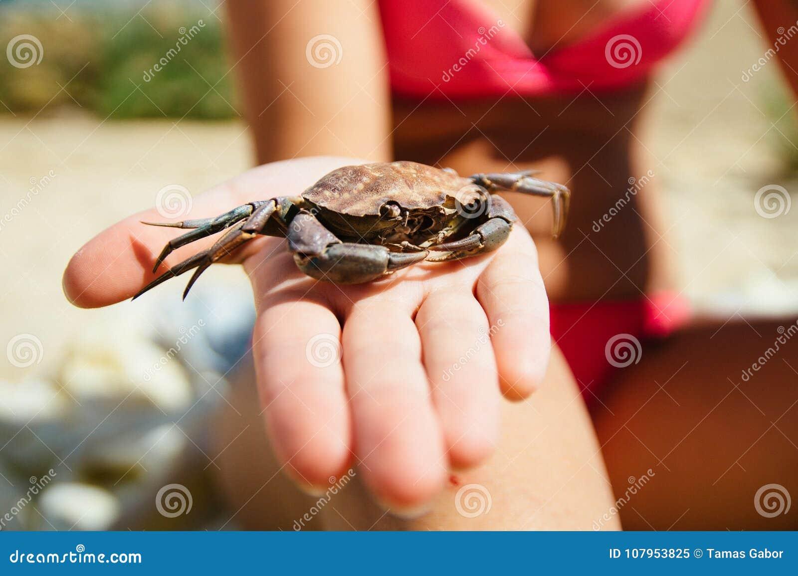 Gestorven die krabshell op het strand wordt en, door een vrouw ter beschikking wordt gehouden gevonden die die bikinis op het str