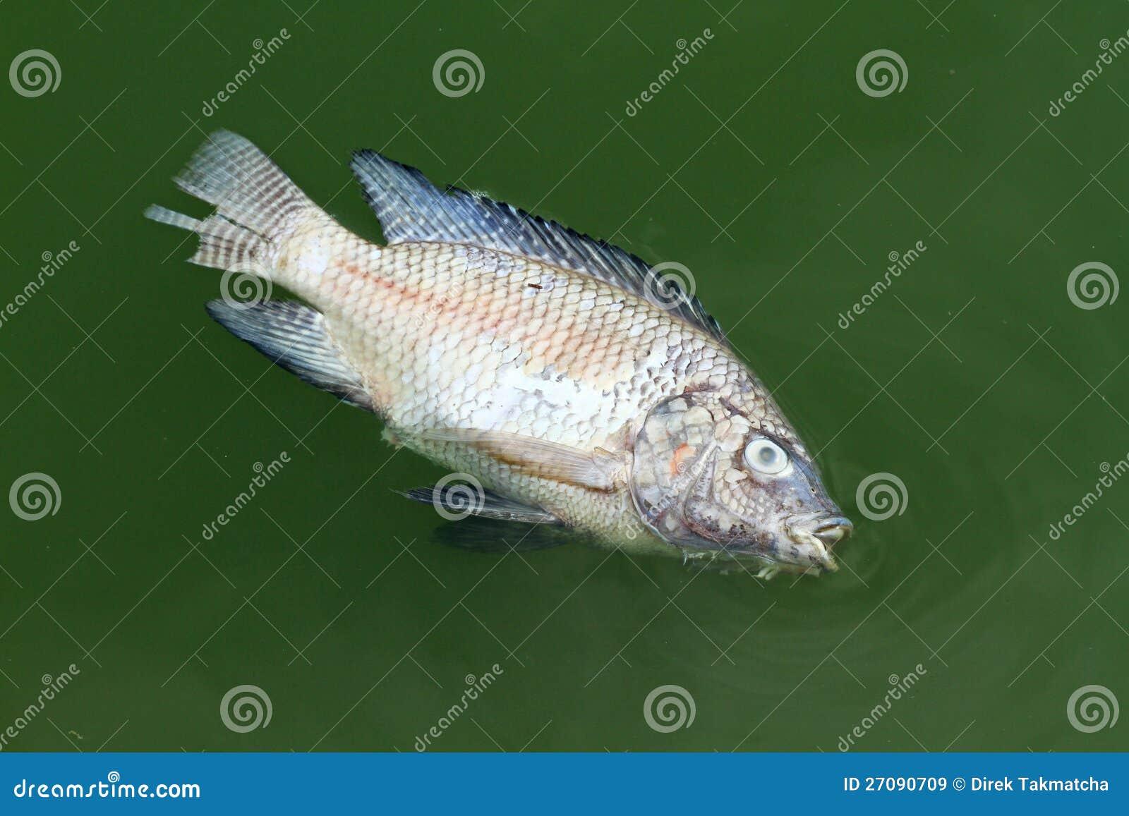 Gestorven vissen