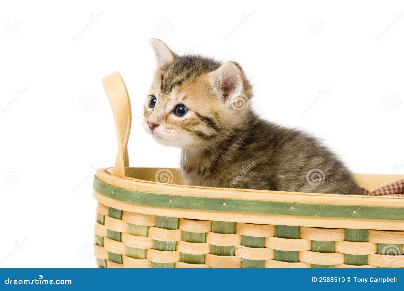 Gestreept katje in een mand
