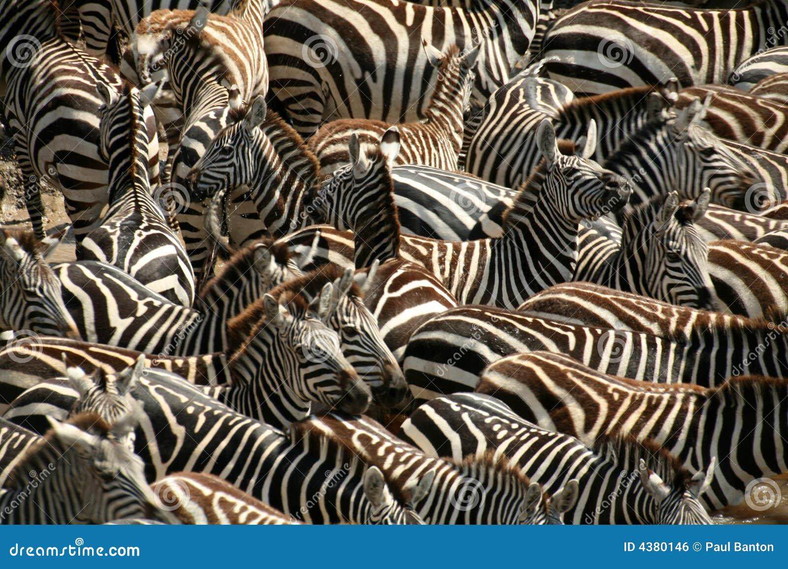Gestreept (Kenia)