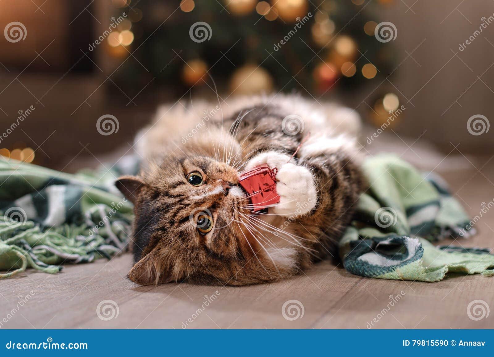 Gestreepte kat en gelukkige kat Kerstmisseizoen 2017, nieuw jaar, vakantie en viering