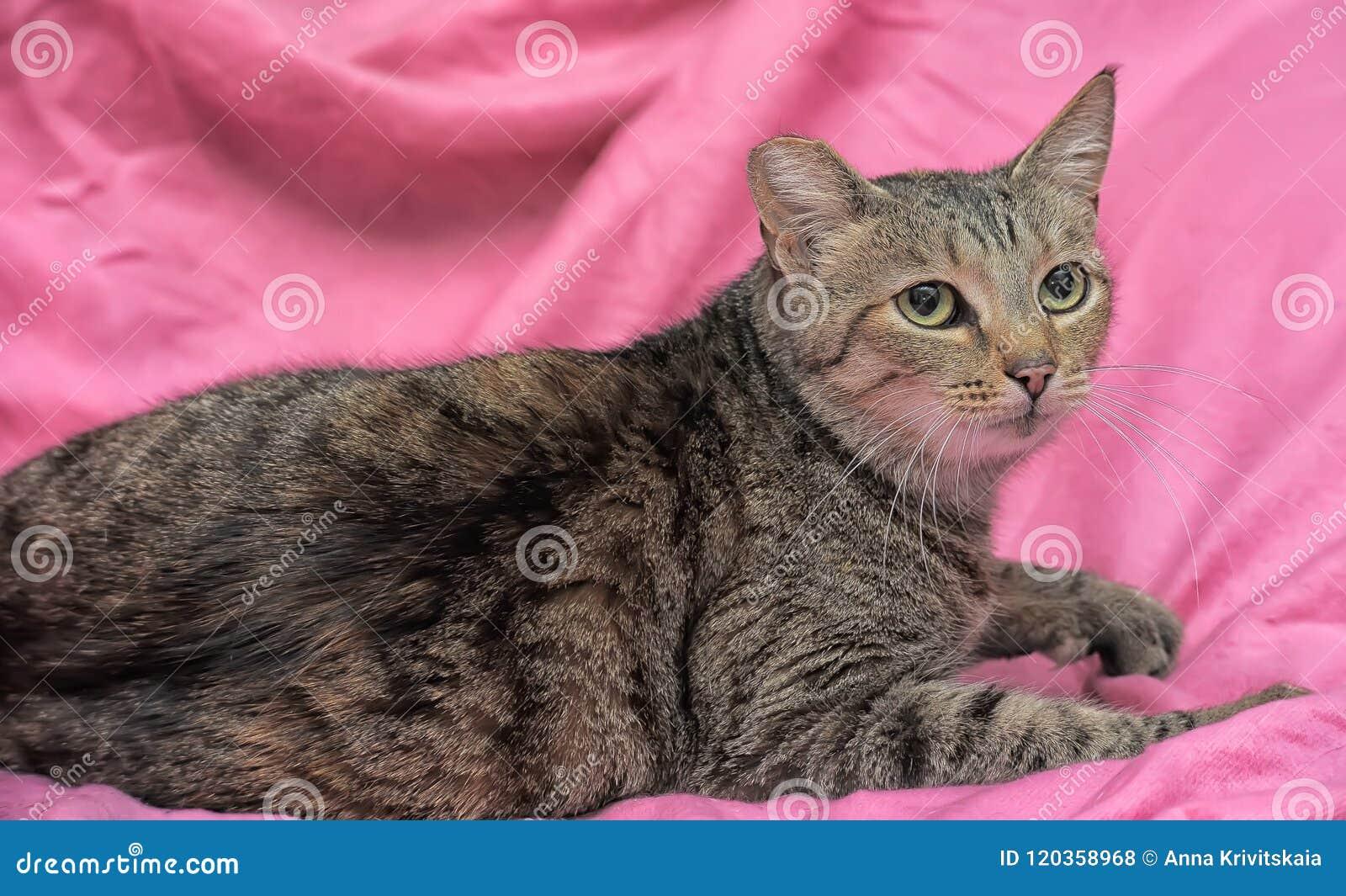 Gestreepte kat met een geknipt oor