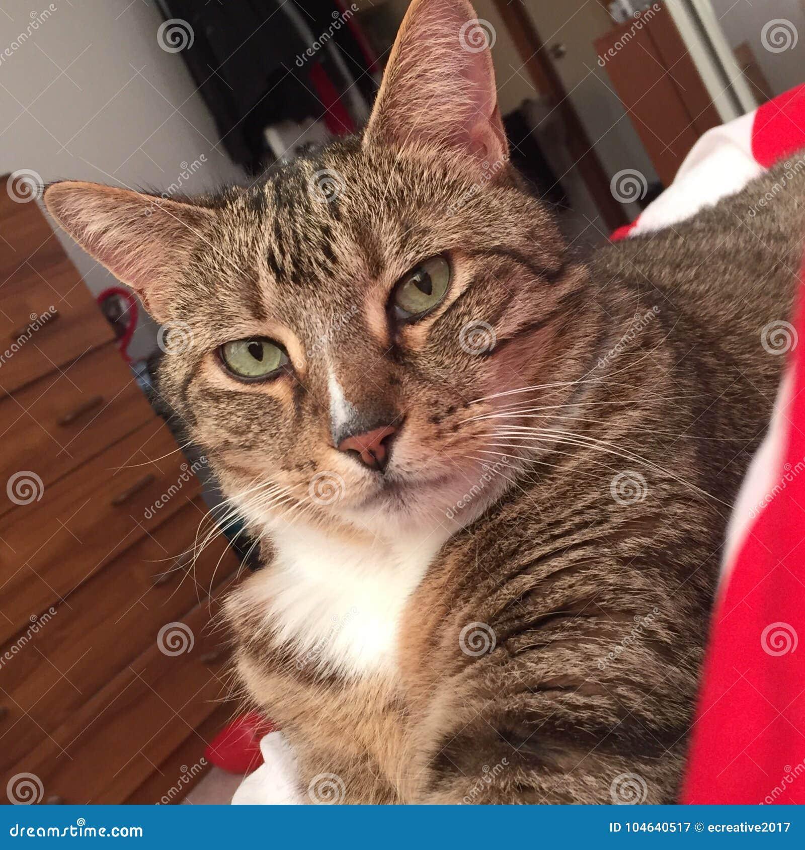 Download Gestreepte Katkat Het Ontspannen In Deken Stock Afbeelding - Afbeelding bestaande uit tabby, diabetes: 104640517