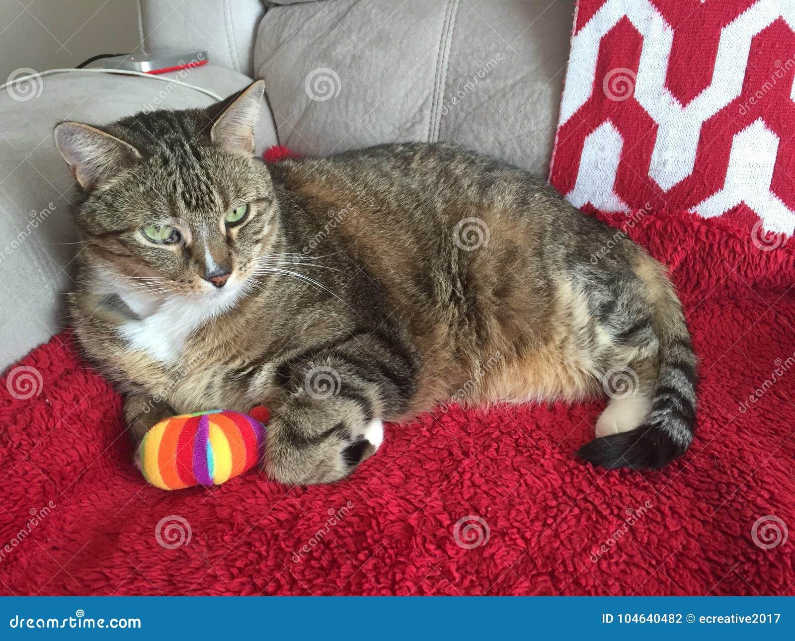 Download Gestreepte Katkat Het Ontspannen Met Teddybeer Stock Foto - Afbeelding bestaande uit rood, zeer: 104640482