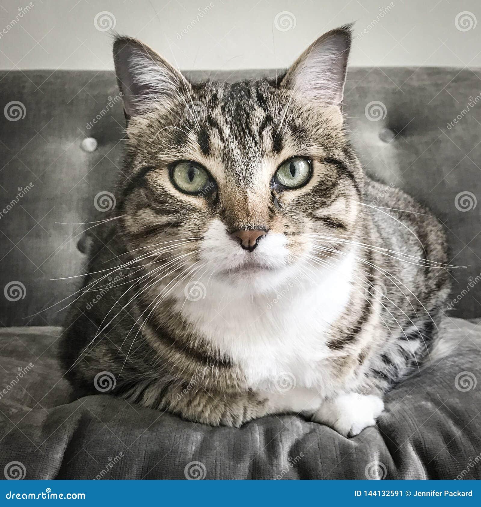 Gestreepte katkat op grijze bank