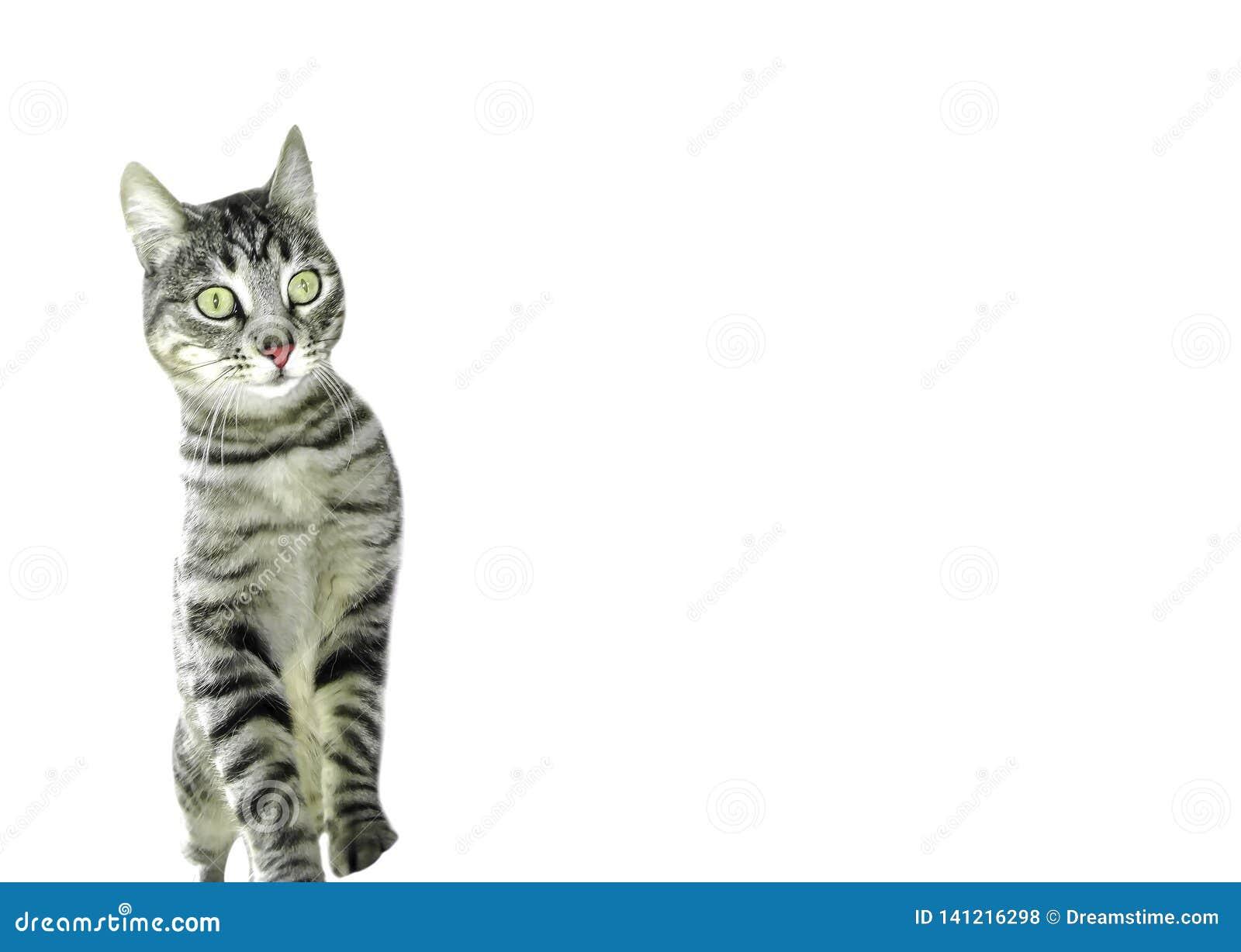 Gestreepte katkat op twee die benen met grote open ogen worden verrast