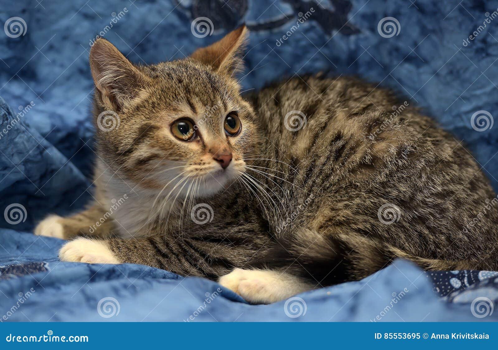 Gestreiftes Kätzchen mit den weißen Tatzen