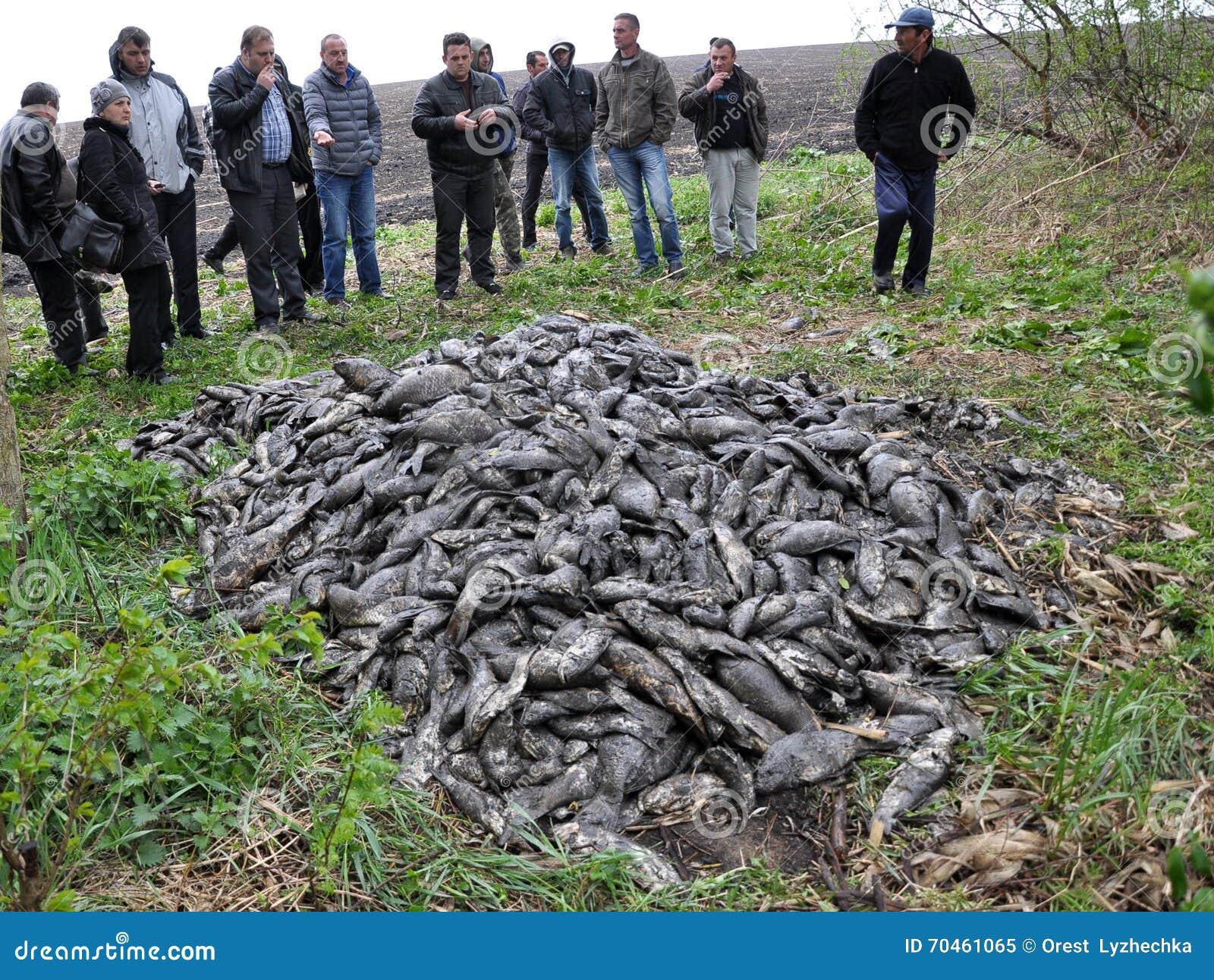 Get tete teichfische redaktionelles bild bild von for Teichfische preise