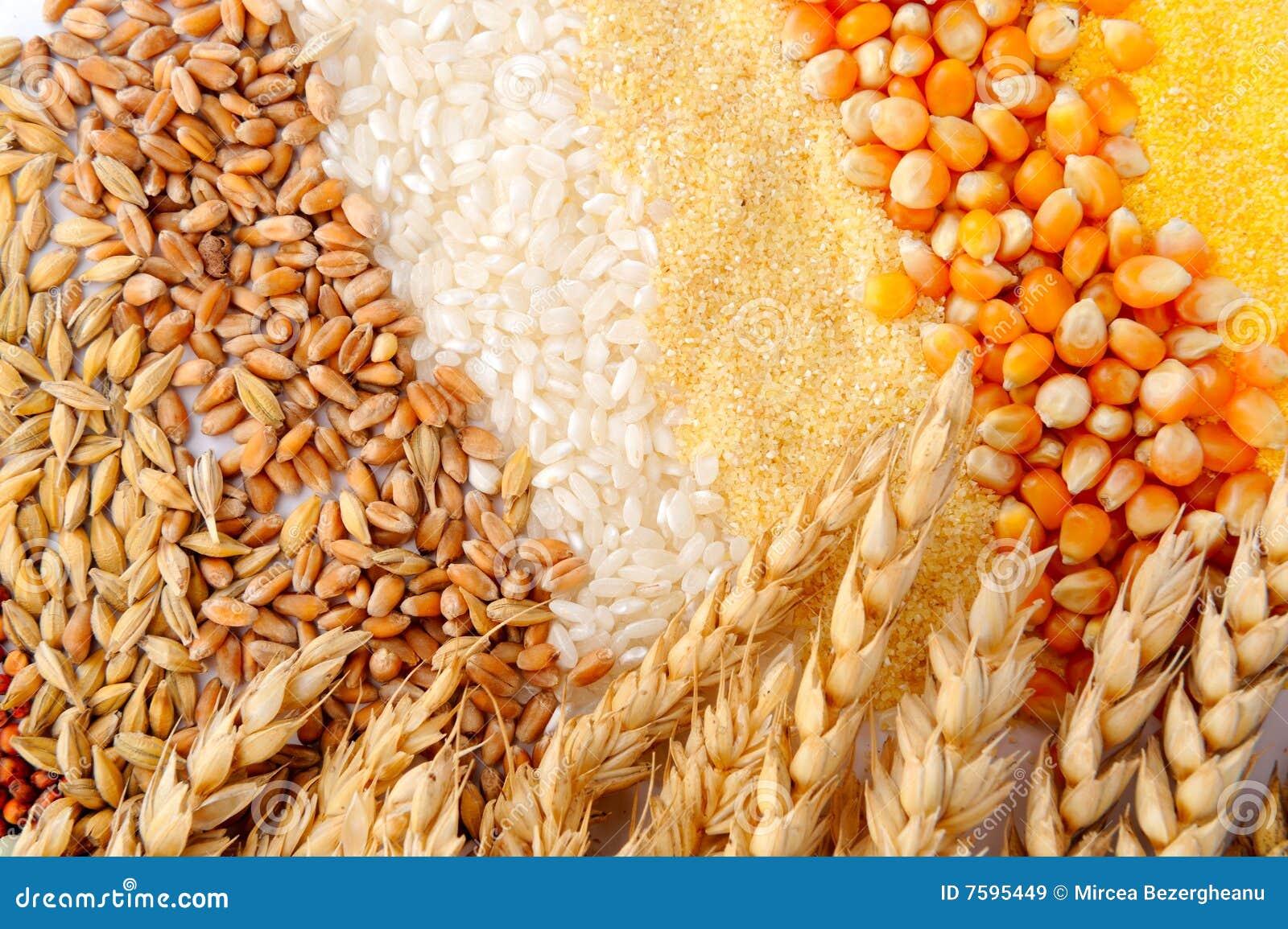 Getreidestartwerte für zufallsgenerator und Weizenohren