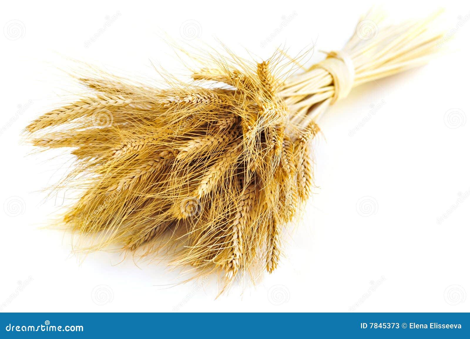 Getrennte Weizenohren