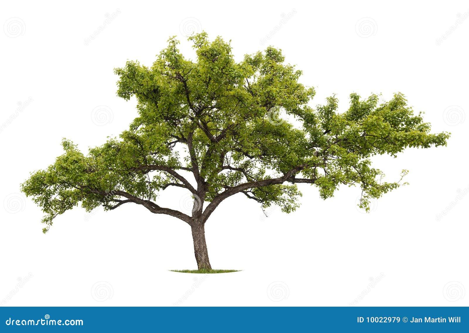 Getrennter Baum