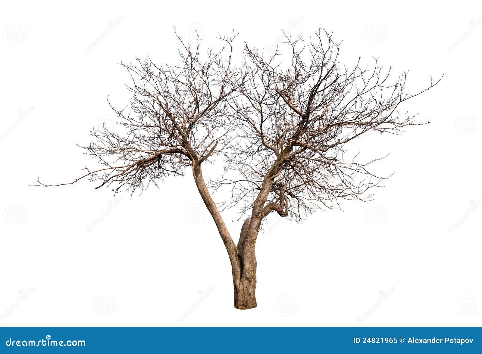 Berühmt Malvorlagen Bäume Und Blätter Bilder - Beispiel Business ...