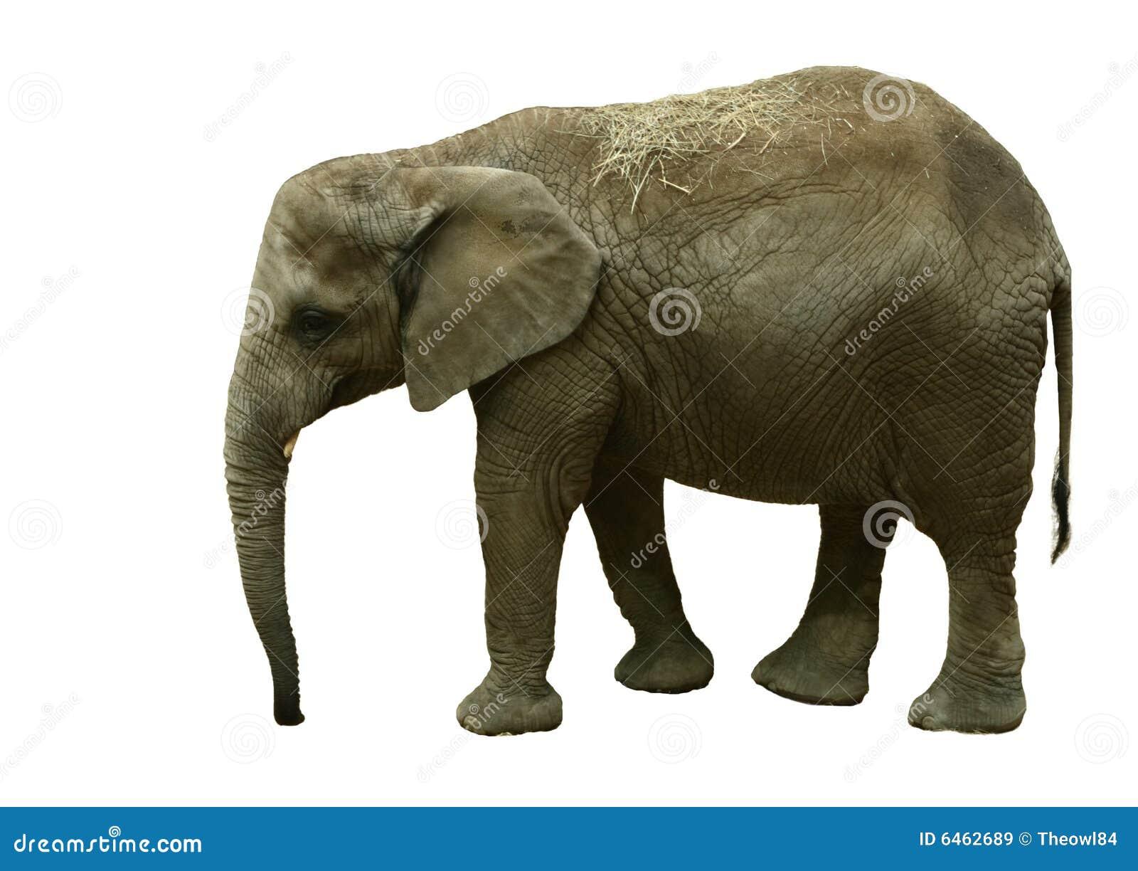 Getrennter Elefant