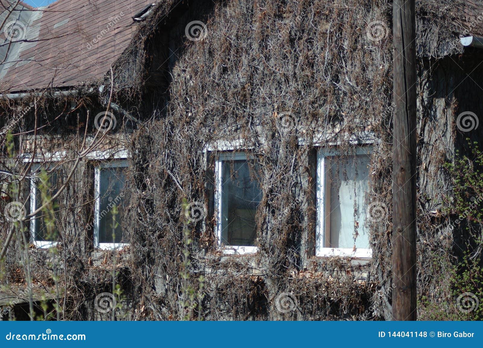 Getrocknete Anlagen auf der Wand des Hauses