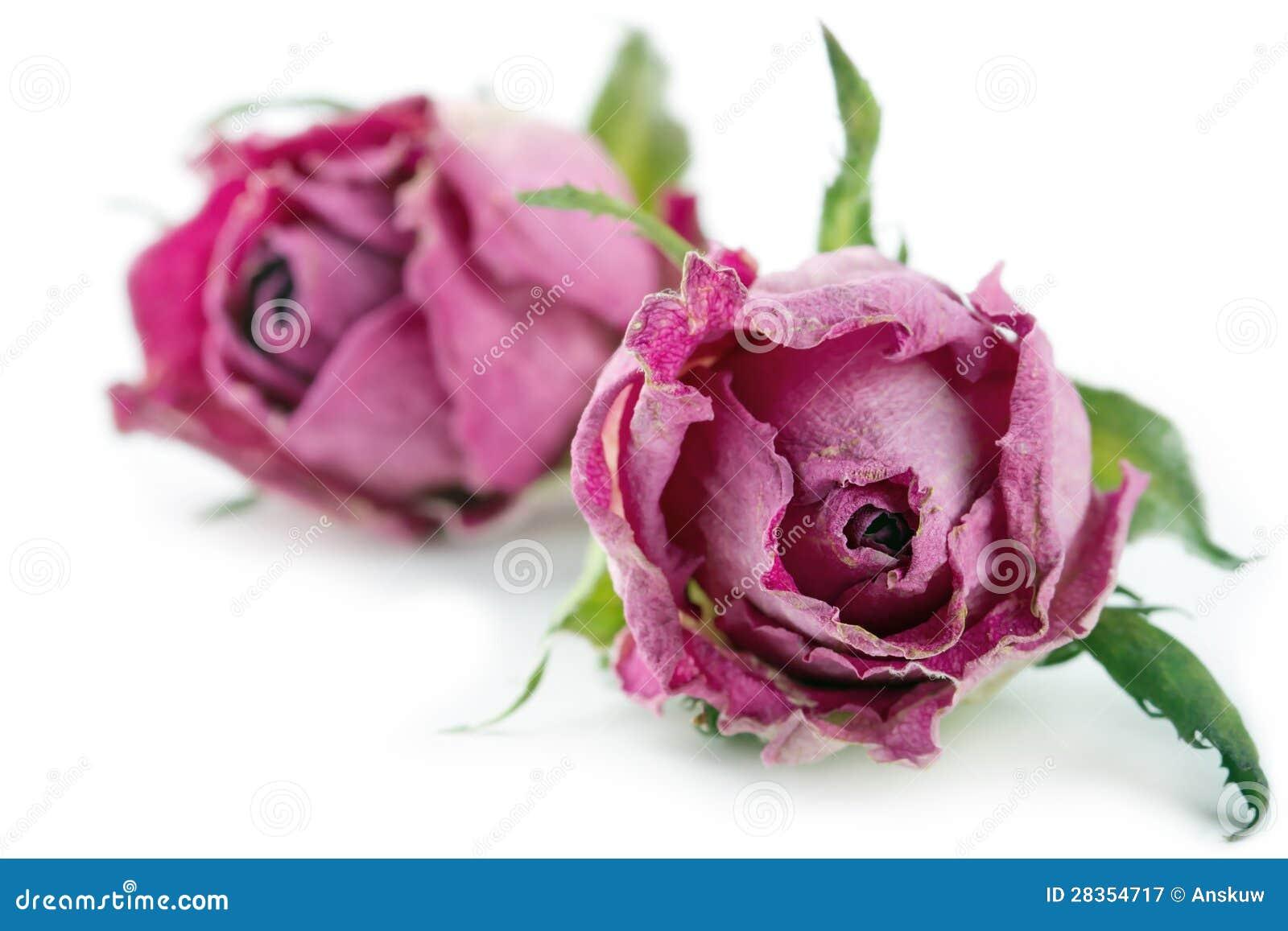 getrocknete rosa rosen auf wei em hintergrund lizenzfreie stockfotografie bild 28354717. Black Bedroom Furniture Sets. Home Design Ideas