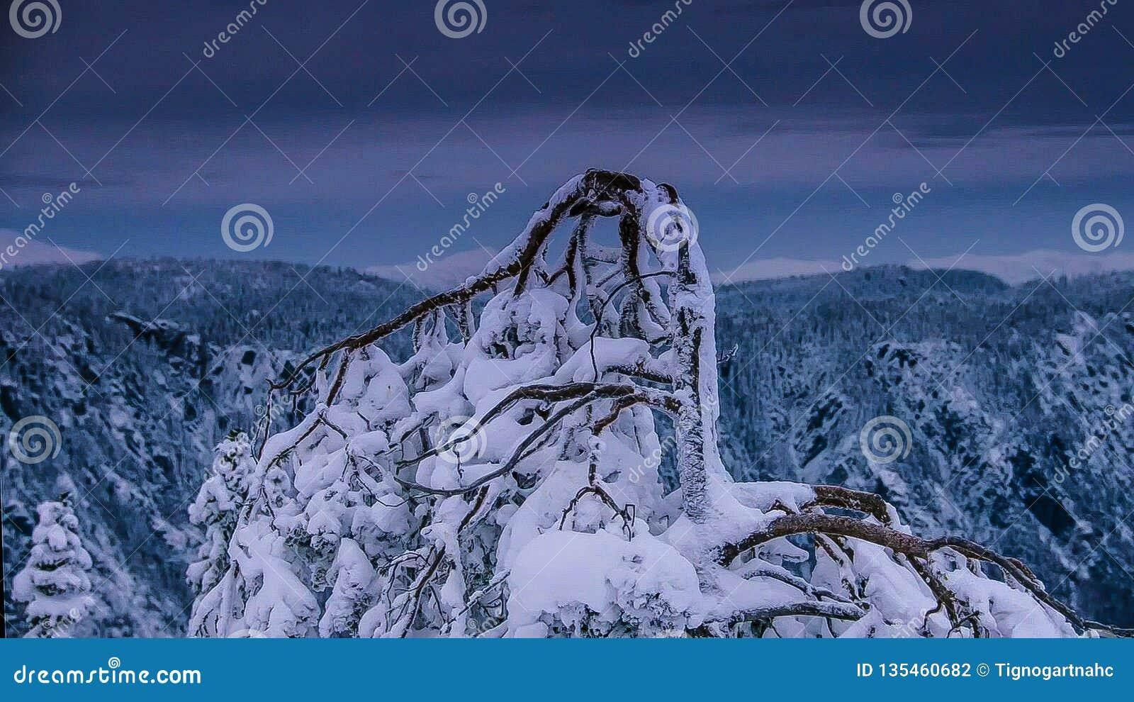 Getrockneter Baum auf dem Schnee in der Wintersaison