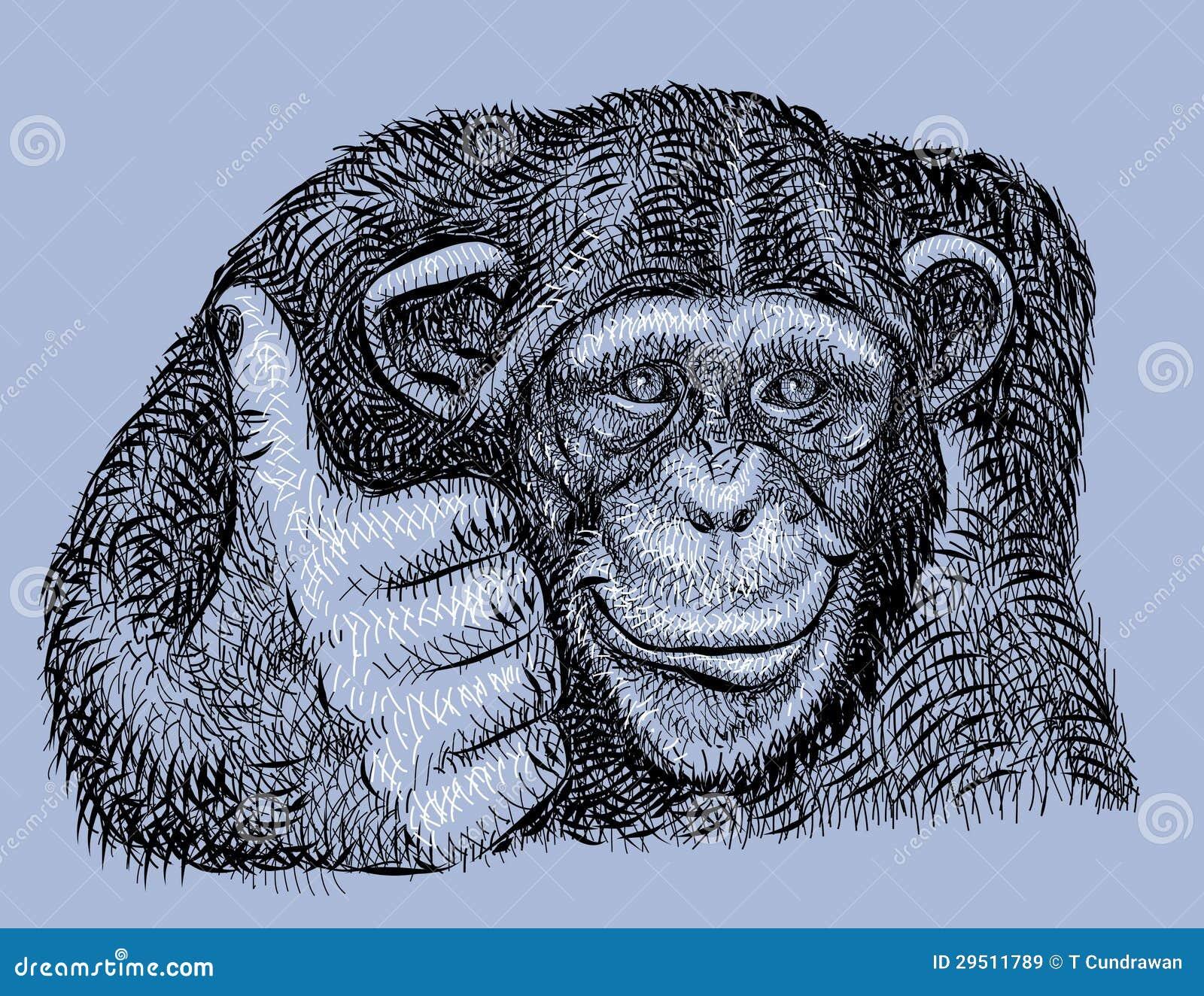 Getrokken de Hand van de chimpansee