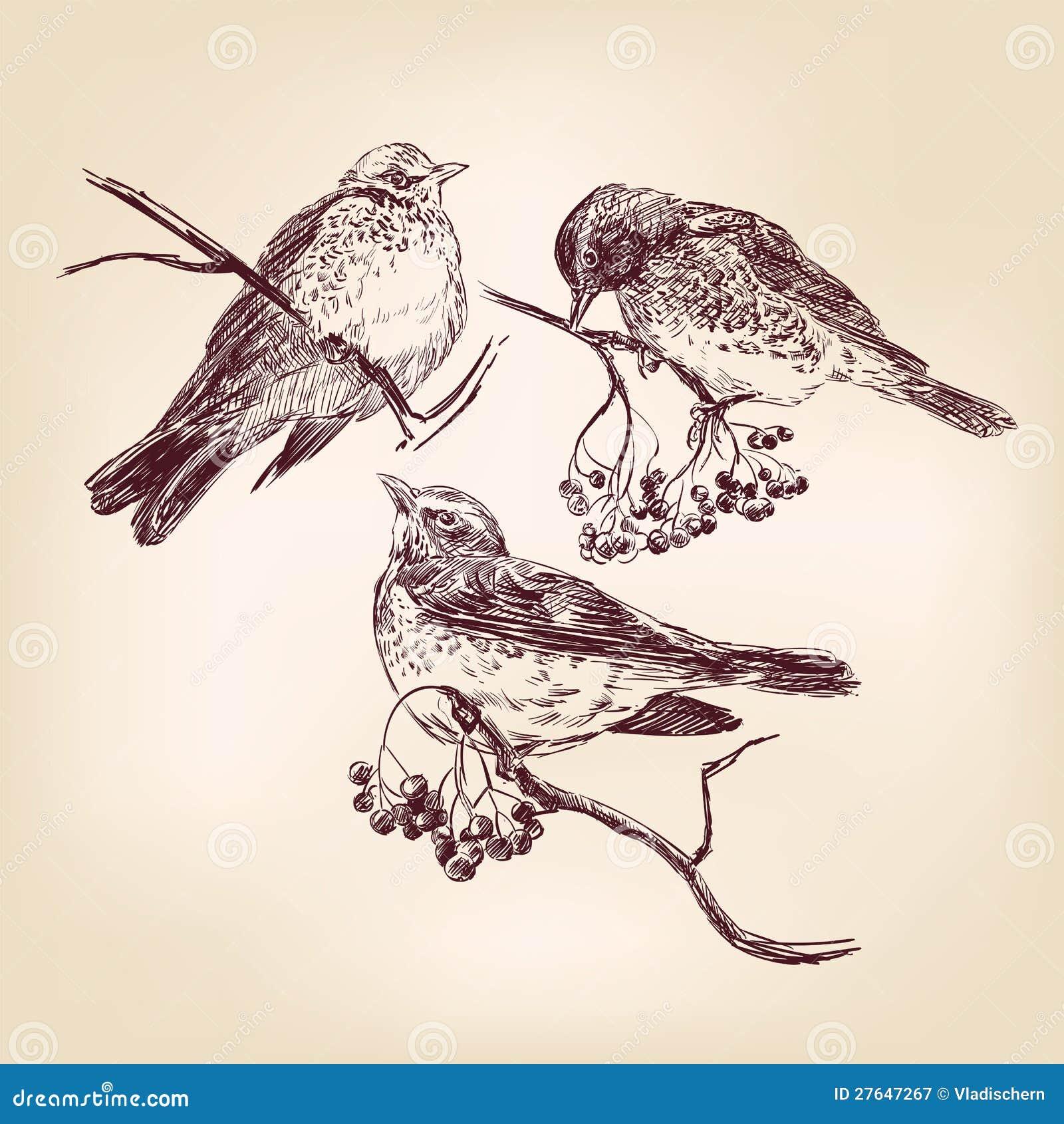 Getrokken de hand van de vogel