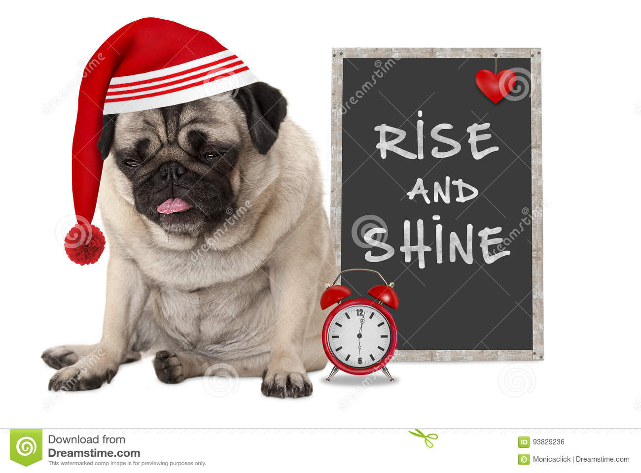 Getting up in early morning, grumpy pug puppy dog with red sleeping cap, alarm clock and sign with text rise and shine