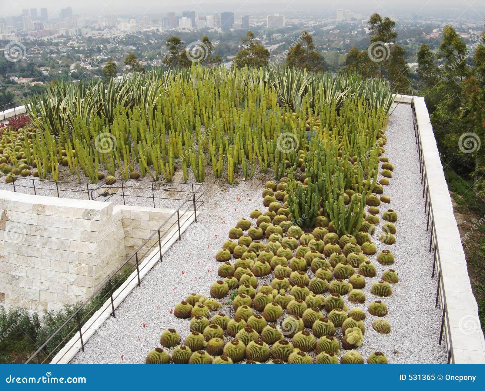 Getty仙人掌的庭院