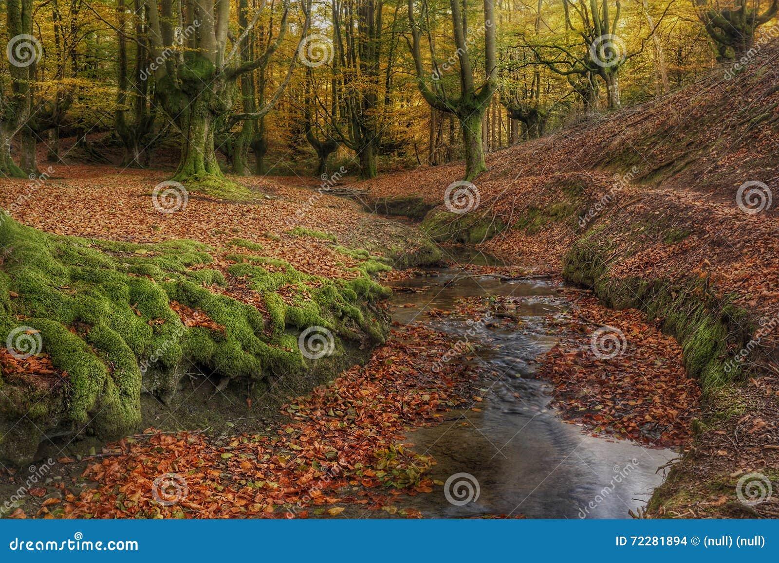 Gevallen bladeren in een de herfstbos