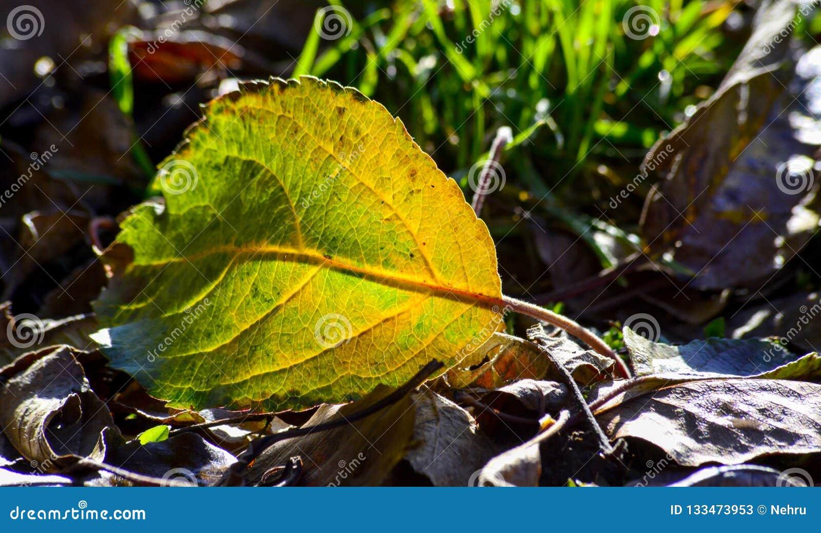 Gevallen de herfstblad op een gras, ochtendschot