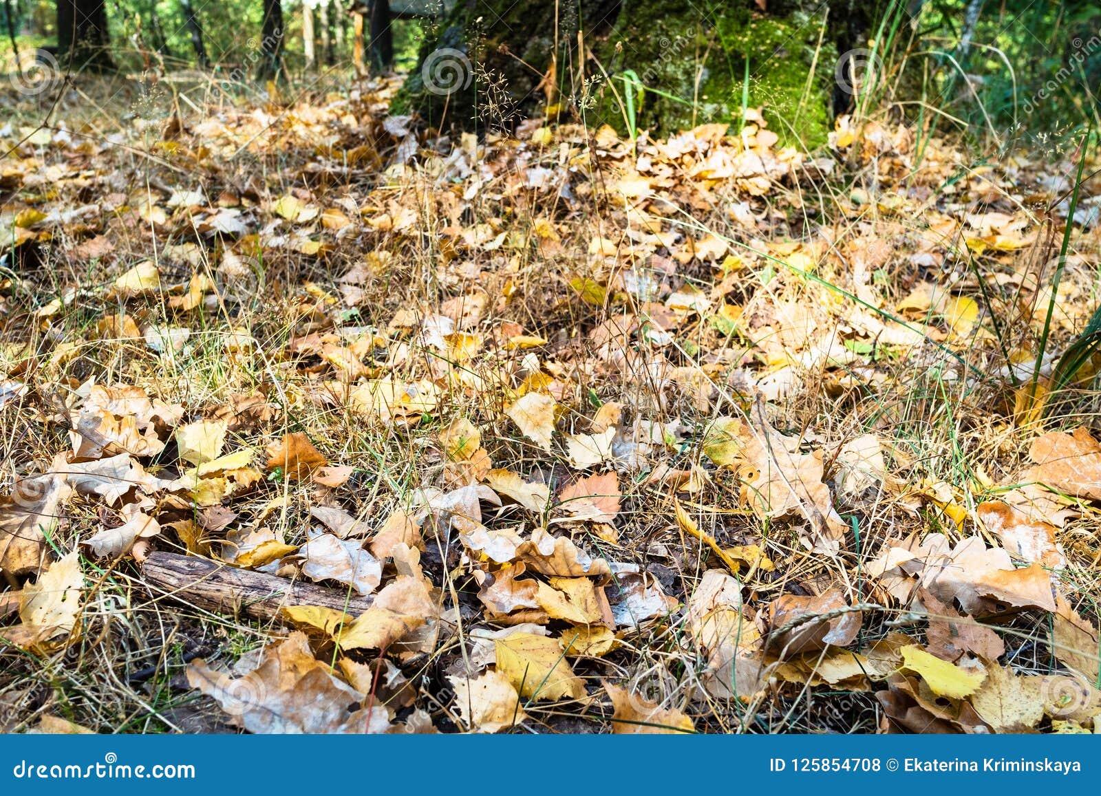 Gevallen eiken en berkbladeren dicht omhoog in stedelijk park