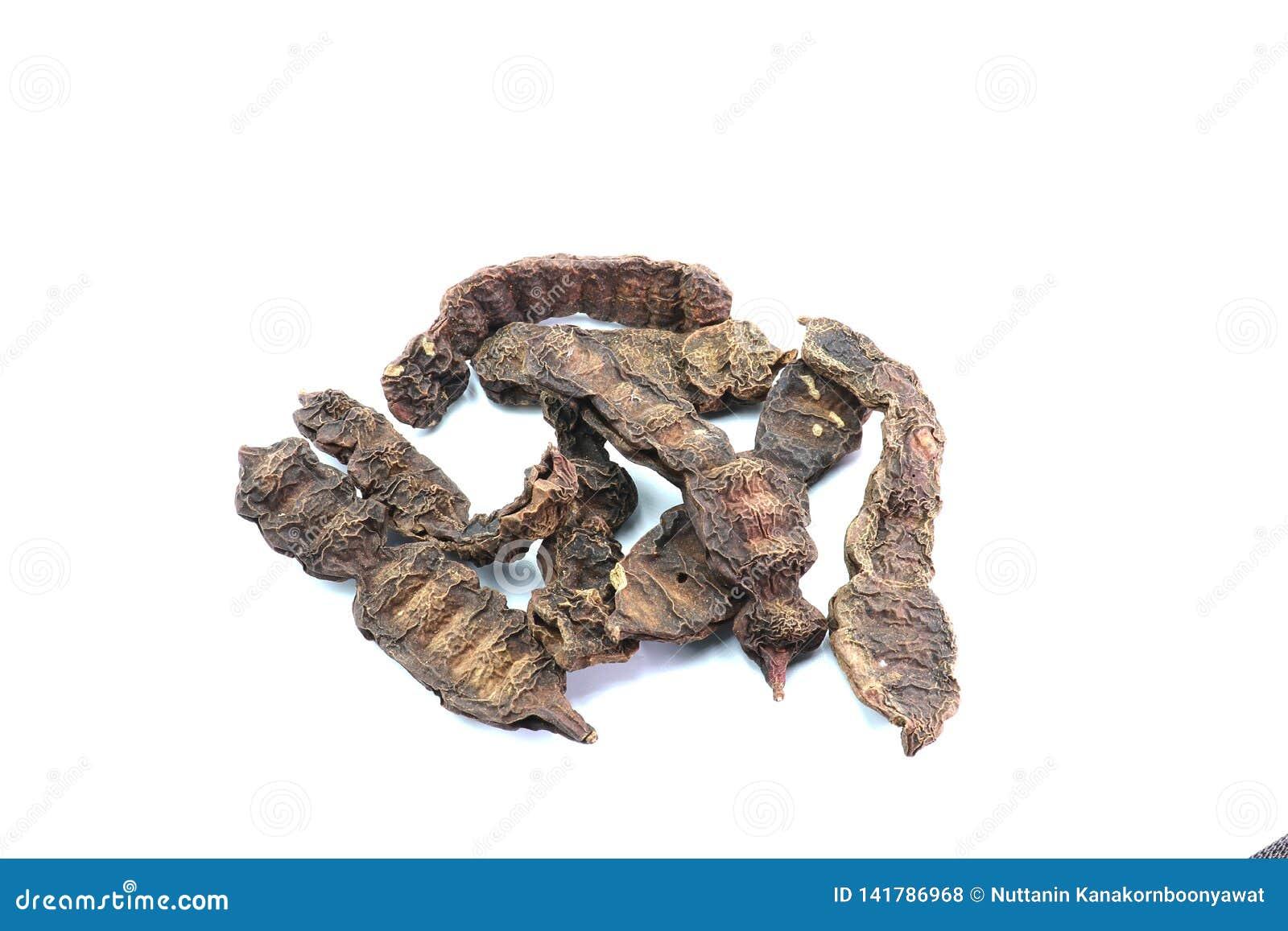 Geverfte die acaciaconcinna op witte achtergrond wordt geïsoleerd