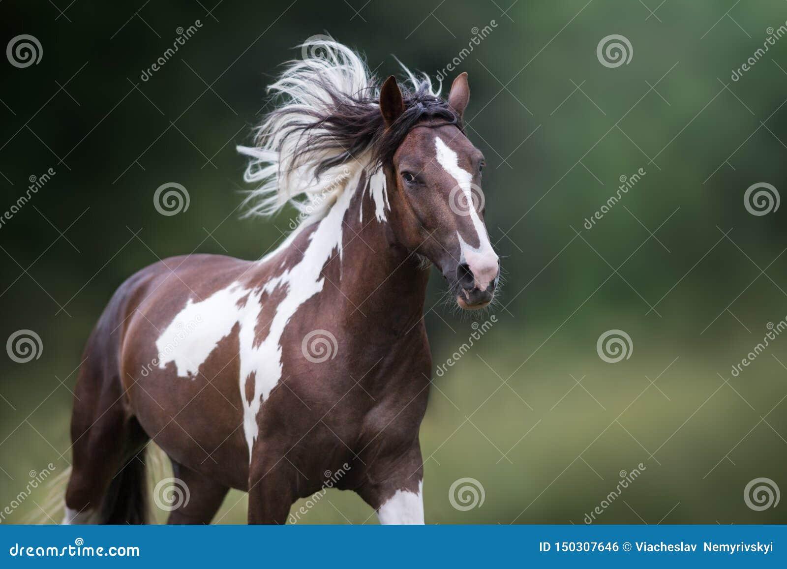Gevlekt paard in motie