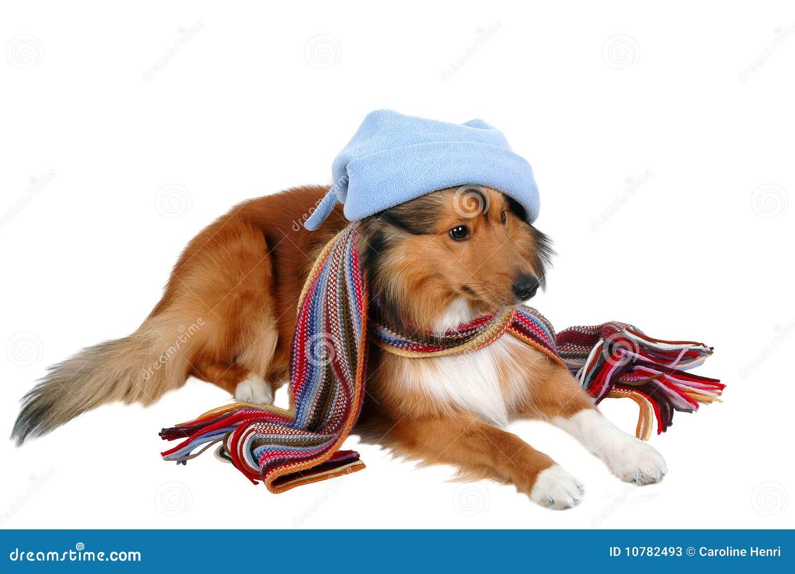 Gevoelig voor de Koude Hond