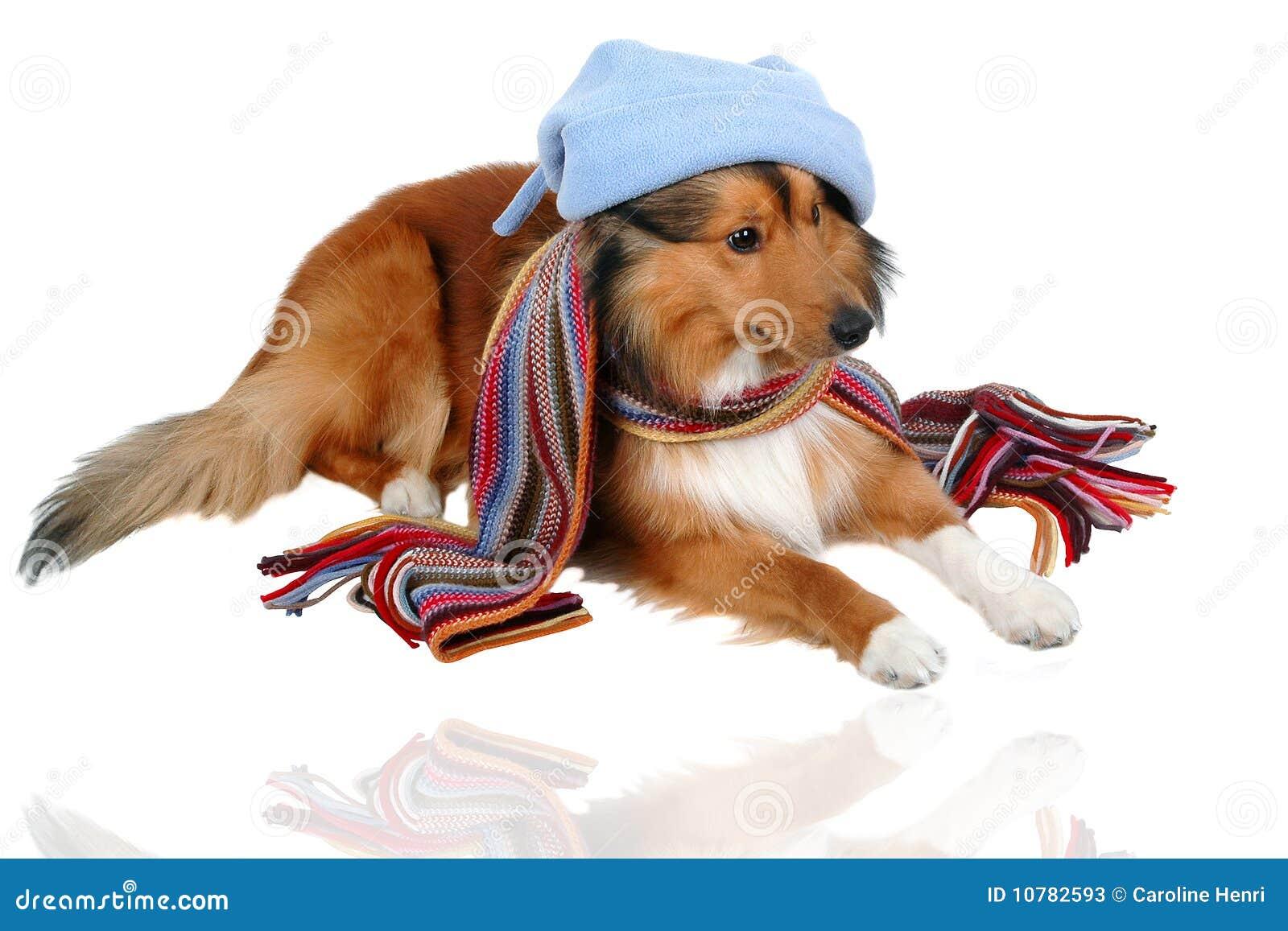 Gevoelig voor Koude Hond 2
