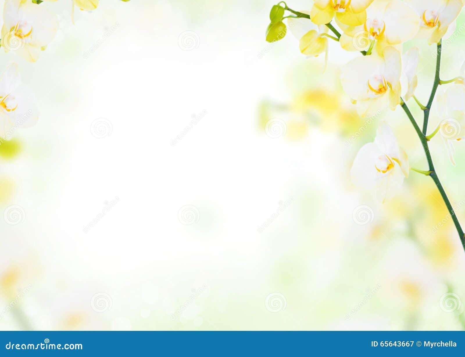 Gevoelige bloemachtergrond van gele orchideeën